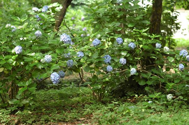 雨上がりの小石川植物園_f0012718_7192216.jpg