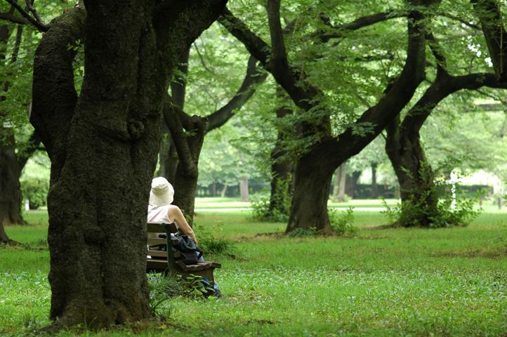 雨上がりの小石川植物園_f0012718_7231141.jpg