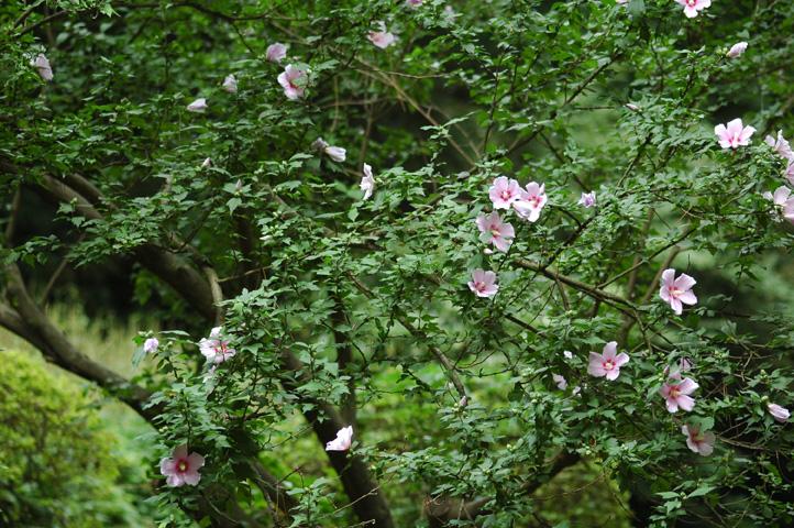 雨上がりの小石川植物園_f0012718_726054.jpg