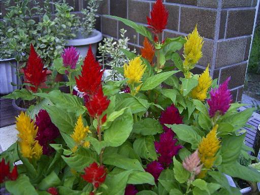 花 はな ハナ_c0117442_2341385.jpg