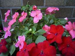 花 はな ハナ_c0117442_23442847.jpg