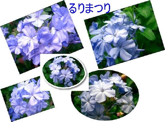 f0031546_19511029.jpg