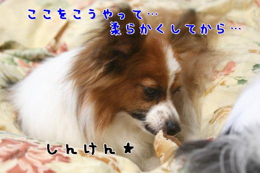 d0013149_0152387.jpg