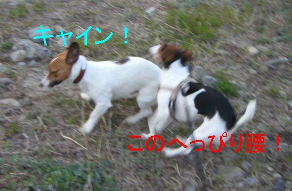f0053952_1320116.jpg