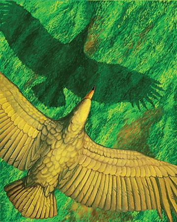 史上最大級の飛べる鳥、主に滑空か_b0052564_1371264.jpg