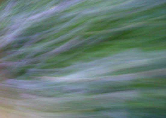 オークリーフ(あじさい電車に乗って)_f0049672_12492146.jpg
