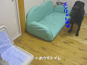 d0043478_011346.jpg
