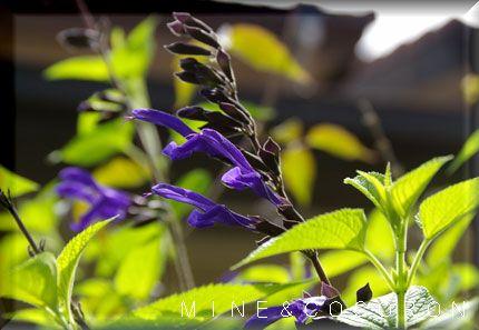 梅雨の頃に咲く花_a0053987_2038695.jpg