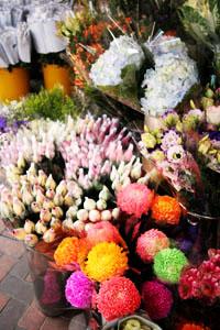 香港の花市場。_b0048834_1522879.jpg