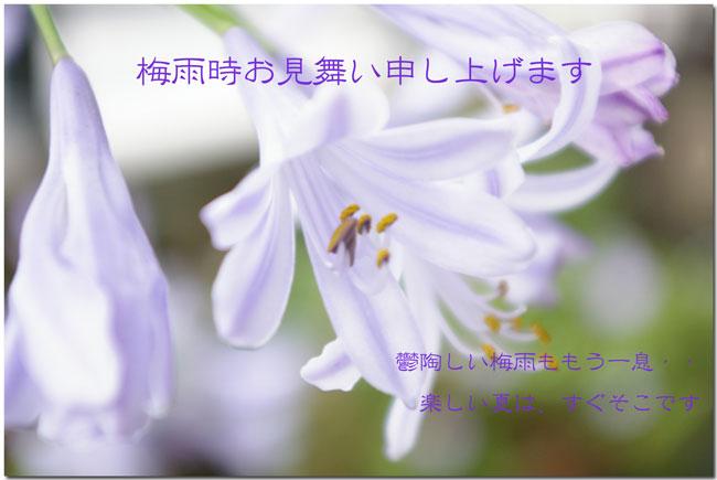 e0096955_16514973.jpg