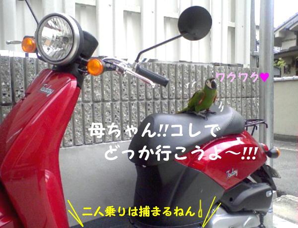 f0132055_10283639.jpg