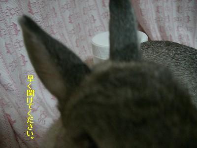 f0104057_202921.jpg