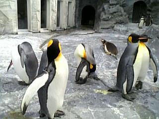 ペンギン_e0040673_9324238.jpg