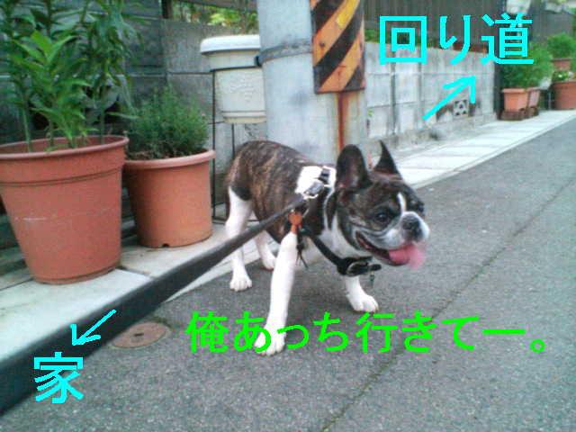 b0076733_1411745.jpg