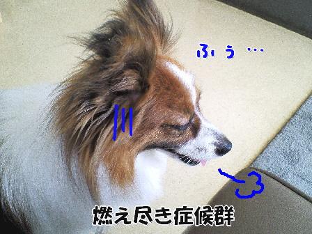 d0013149_1101995.jpg