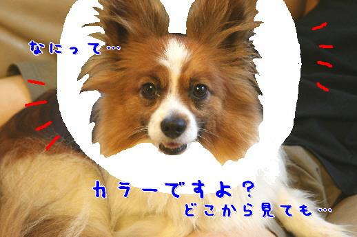 d0013149_1231440.jpg