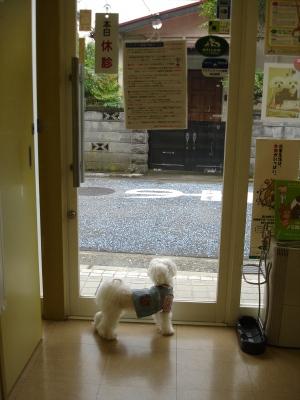 今日の病院での親子〜_b0001465_15481854.jpg