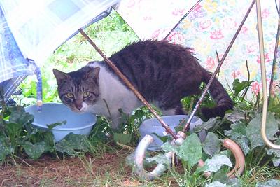 2007年7月2日 藍染め浴衣の会〜藍染めの巻_d0073371_2044276.jpg