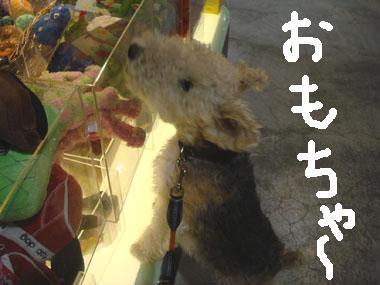 b0091373_1372570.jpg