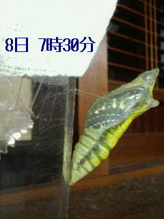 f0126418_10515392.jpg
