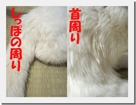 b0097145_075280.jpg