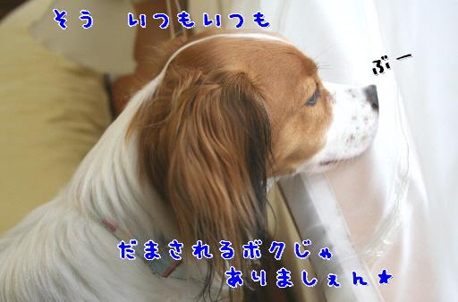 d0013149_1392459.jpg