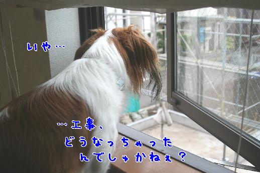 d0013149_1452061.jpg