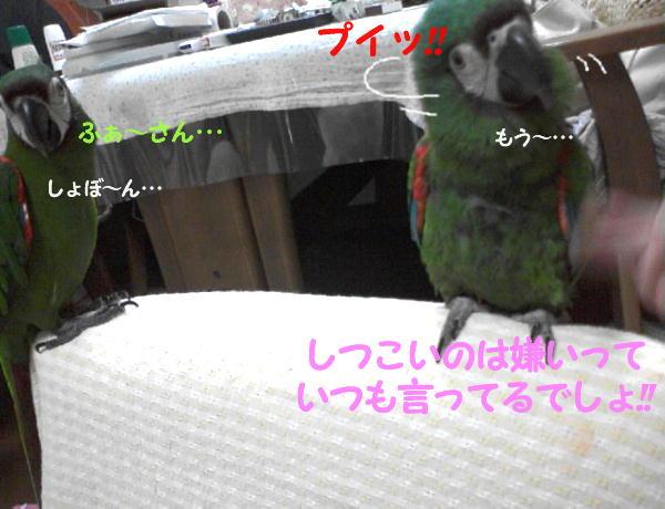f0132055_124538.jpg