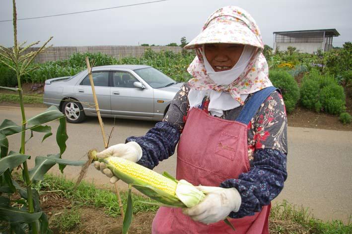 下総台地の実家の畑で極上のトウモロコシあさどり!(7・6)_c0014967_13502840.jpg