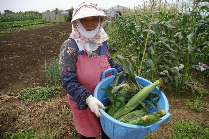 下総台地の実家の畑で極上のトウモロコシあさどり!(7・6)_c0014967_13504484.jpg