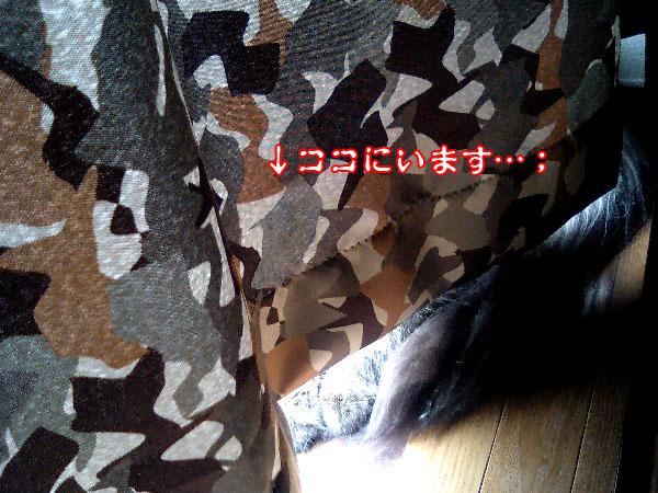 e0019594_2148671.jpg