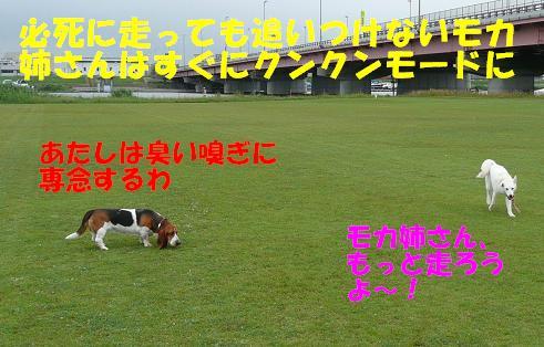 f0121712_1533132.jpg