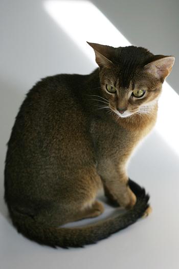 [猫的]体重物語その1_e0090124_8223989.jpg