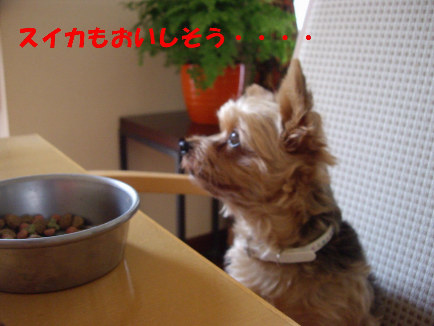 b0113243_13362063.jpg