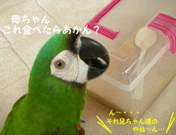 f0132055_022518.jpg
