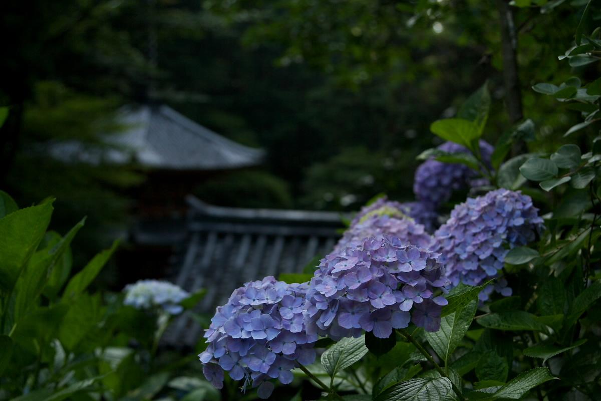 京都 岩船寺 <紫陽花> 2_f0021869_20163793.jpg