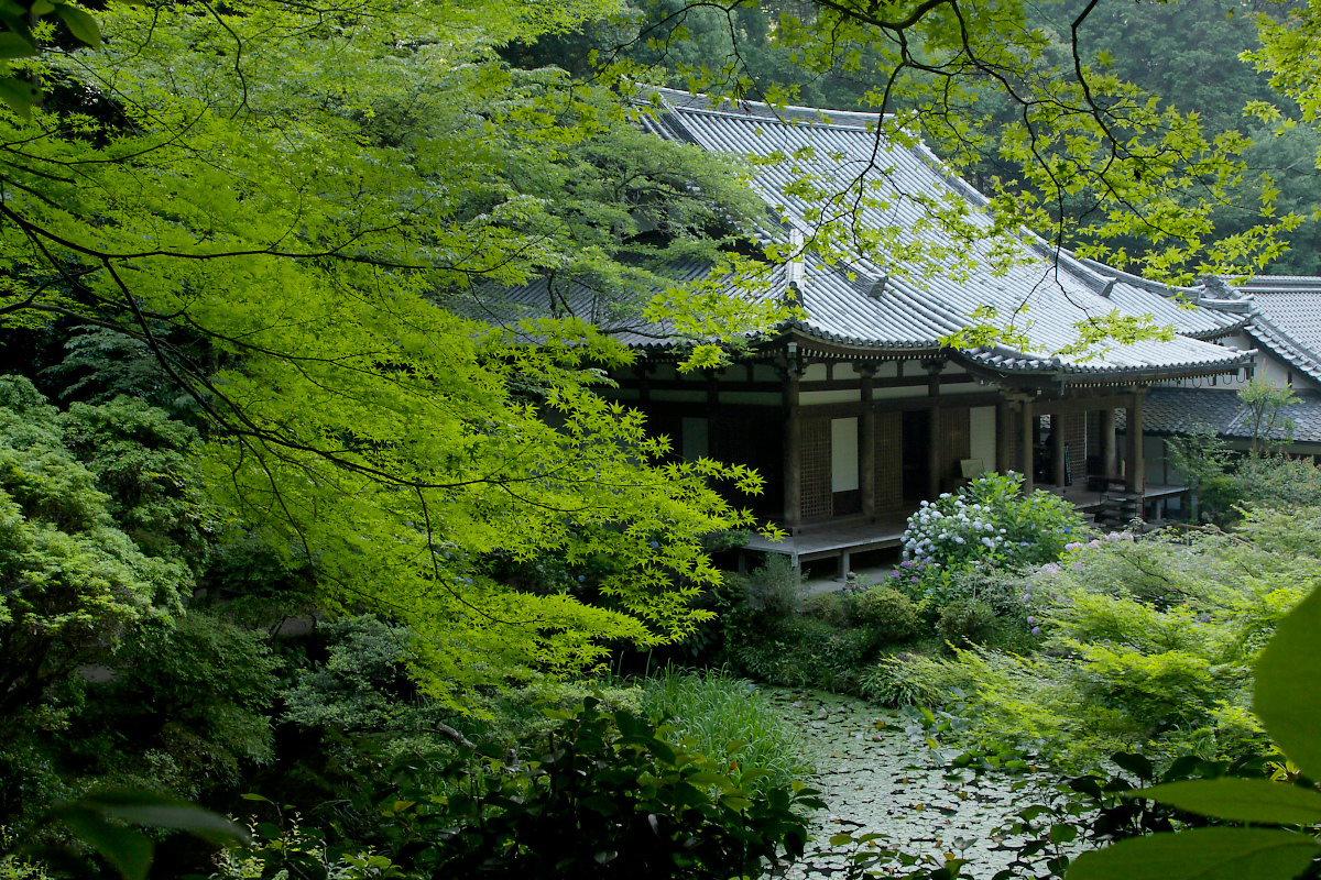 京都 岩船寺 <紫陽花> 2_f0021869_2020216.jpg