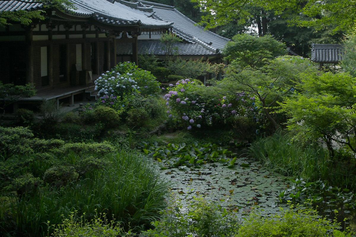 京都 岩船寺 <紫陽花> 2_f0021869_2023432.jpg