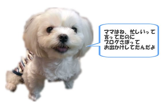 b0060071_065048.jpg