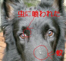 f0109202_22144318.jpg