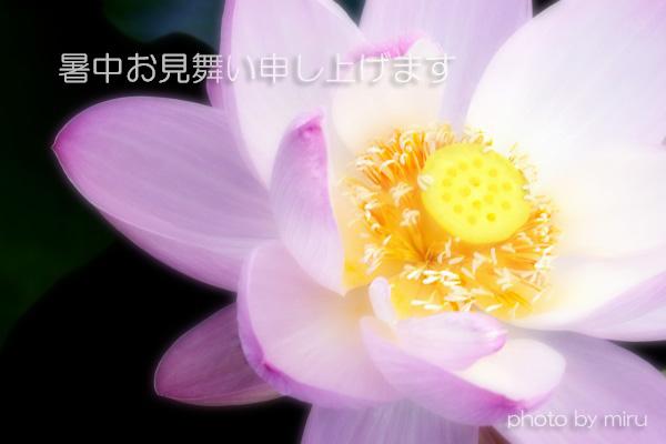 c0037519_19131060.jpg