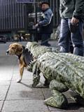 犬服_c0006432_19124939.jpg