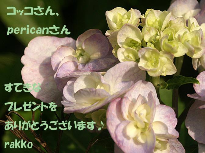 e0097746_233759.jpg