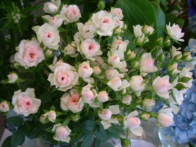 オークリーフ(水色の大きな紫陽花)_f0049672_12111440.jpg