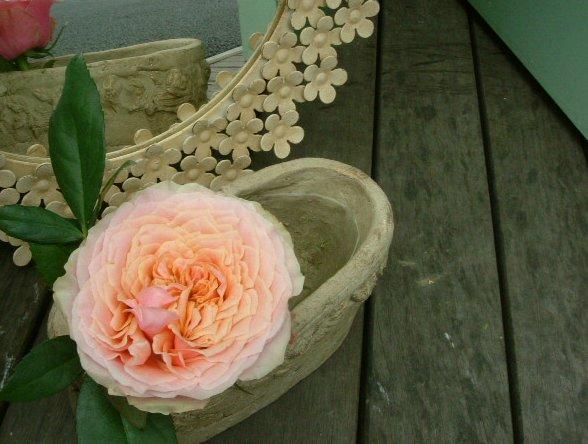 オークリーフ(水色の大きな紫陽花)_f0049672_1284293.jpg