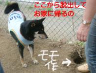 b0057675_151011.jpg