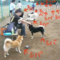 b0057675_1563270.jpg