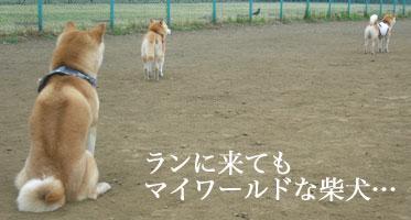 b0057675_158458.jpg