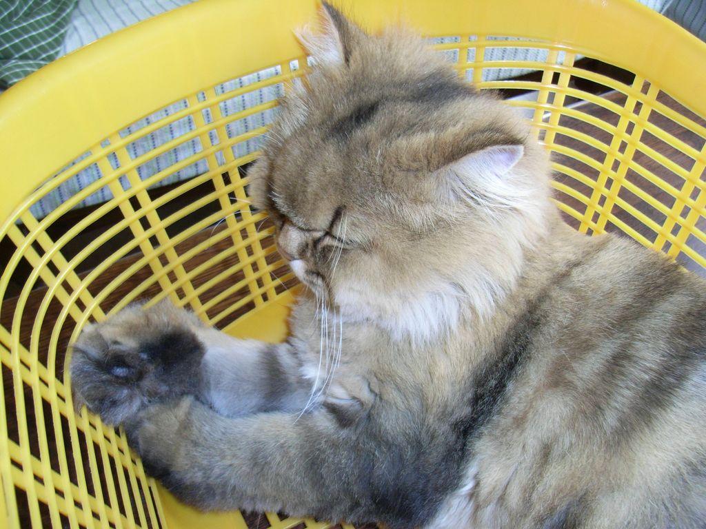 ひさびさの猫たち_c0025115_18584513.jpg