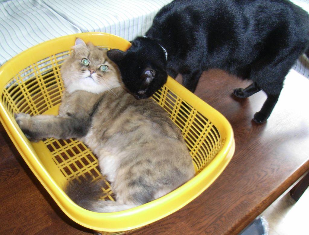ひさびさの猫たち_c0025115_1913145.jpg
